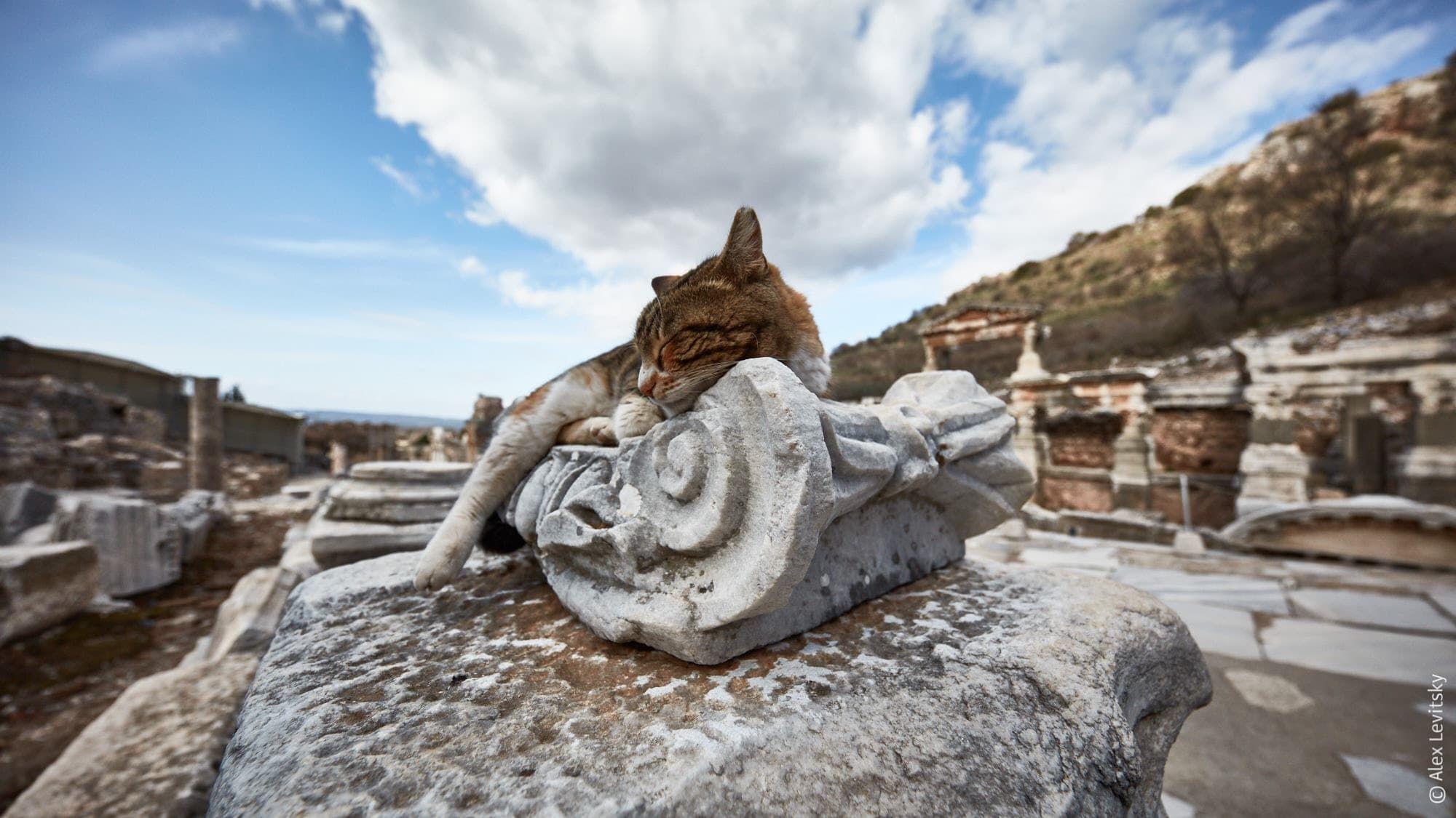 Турция, Эфес