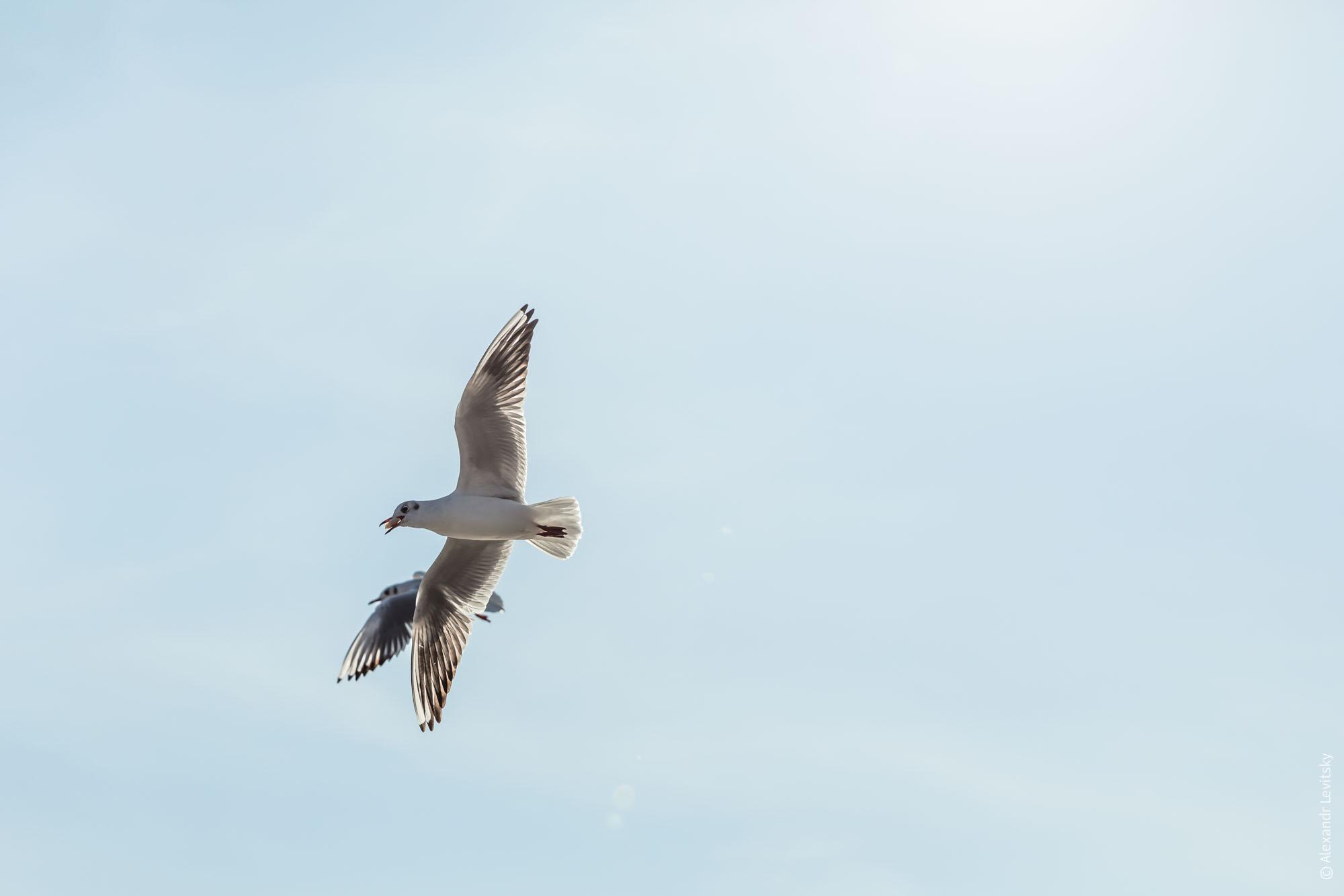 Одесские птицы