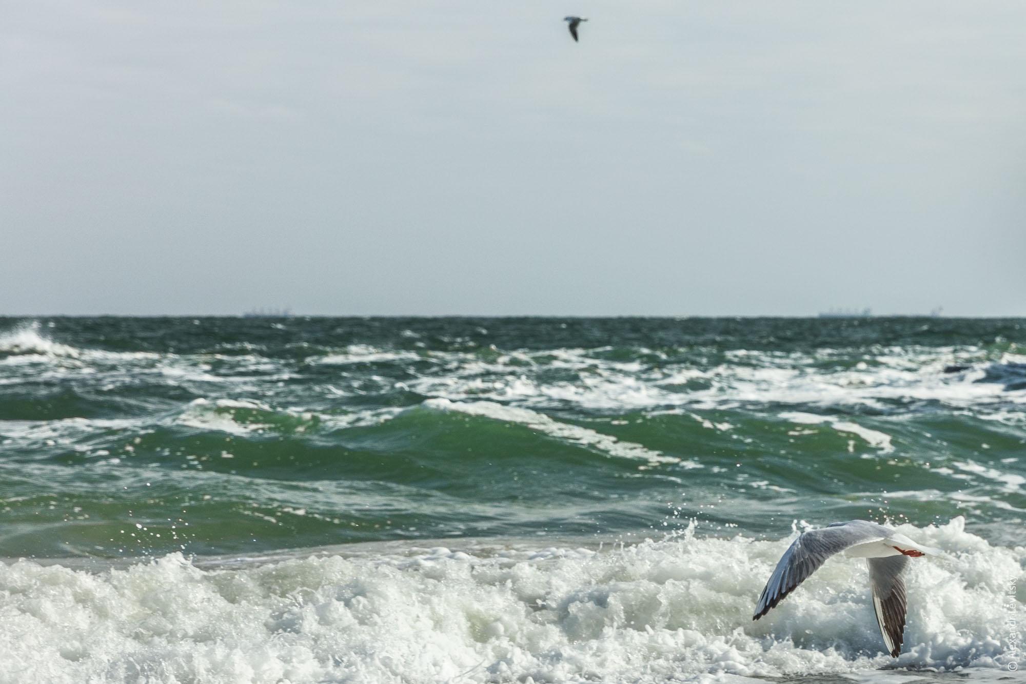 Море в Одессе